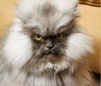 кот-псих от ирины медведевой