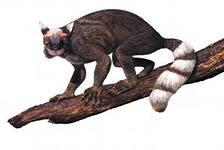 Предок приматов