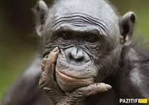 Мудрость шимпанзе