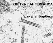 Эпидермис - гранулы Бирбека